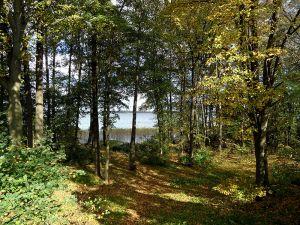 Uferwald